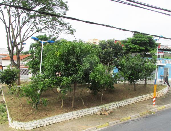 Pomar urbano ajuda a combater poluição e melhorar a vida nas cidades