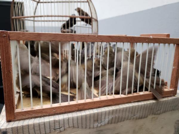 Operação policial detém traficantes de animais silvestres em Osasco