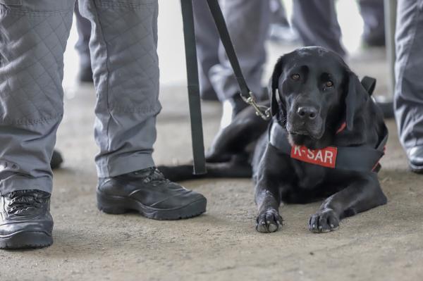 Conheça os melhores amigos da Polícia Militar de São Paulo