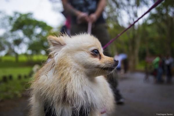 Cotia: saiba como fazer a inscrição para castrar seu cão ou gato