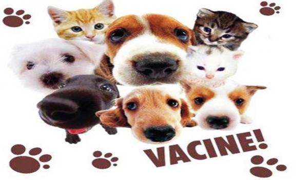 Andradas MG : Vacinação Antirrábica começa no dia 15 de julho na zona rural