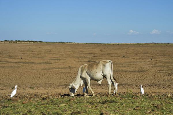 São Paulo é um dos estados mais afetados pela seca, mostra estudo