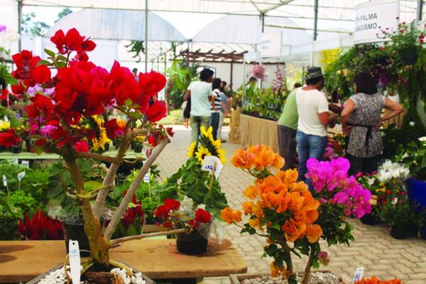 São Paulo é o estado que mais produz e exporta flores no Brasil - Foto ilustrativa