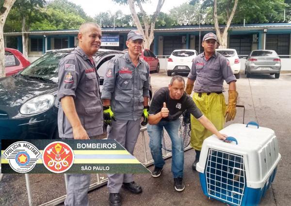Bombeiros da Polícia Militar de SP salvam cachorro que caiu no rio na capital