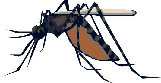 Com a chegada do verão, saiba como deixar sua casa livre de criadouros do Aedes aegypti
